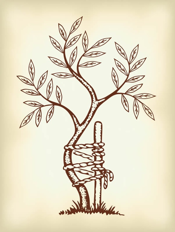 Orthopedic-Tree-Small